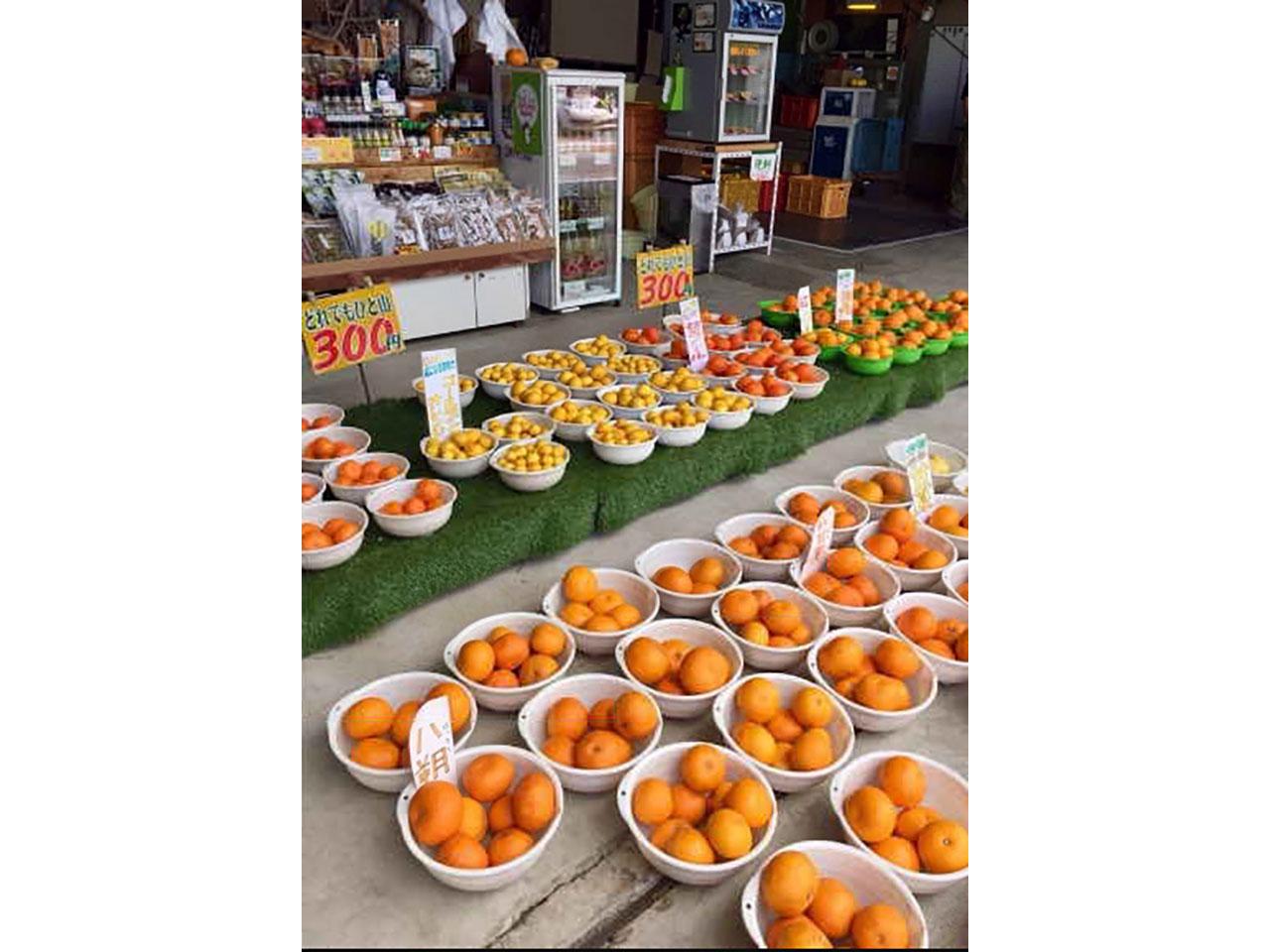柑橘問屋 石澤商店